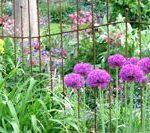 cropped-091_bespoke_iron_fencing.jpg
